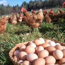organik köy yumurta fiyatları