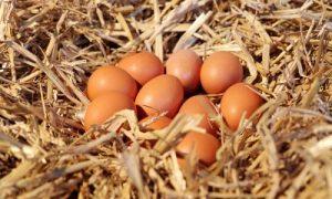 organik yumurta firmaları